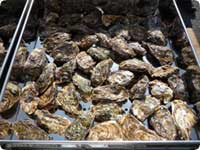 Oysters Festival